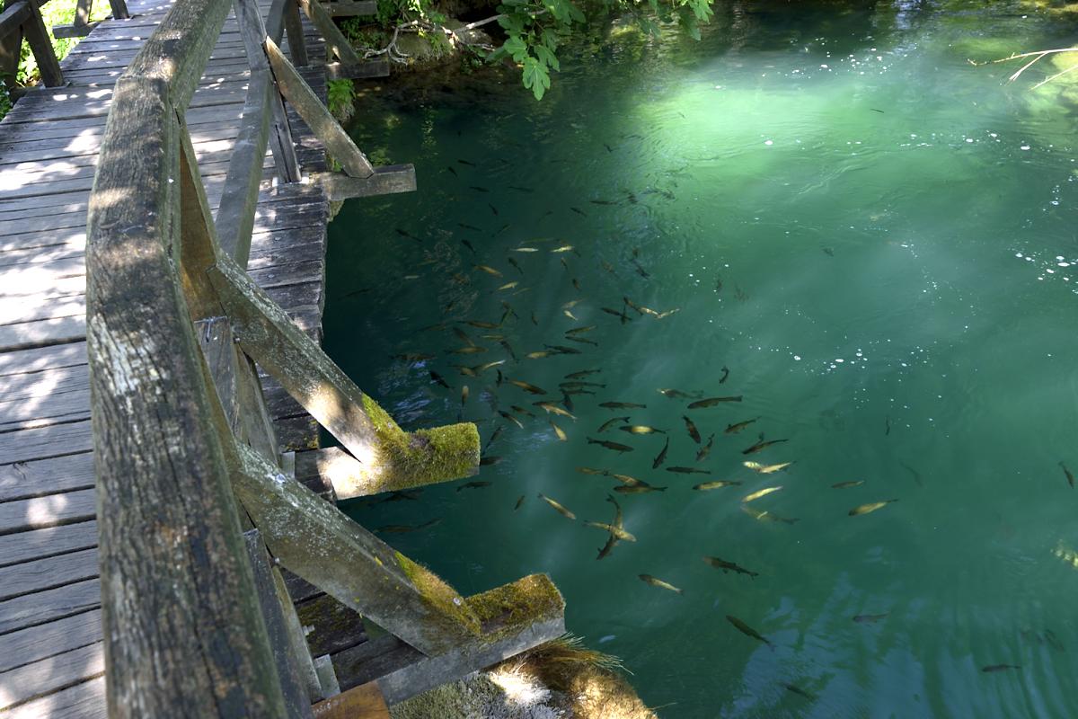 Krka national park fish